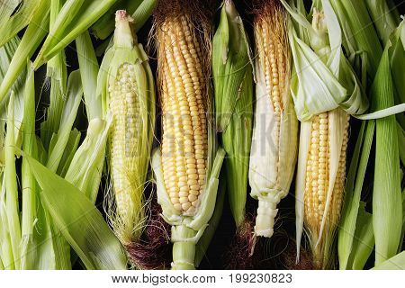 Young raw uncooked corn cobs in leaves. Close up, top view. Food background