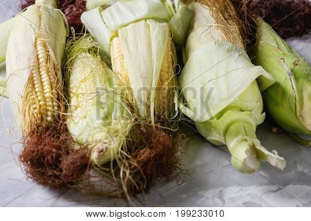 Young raw uncooked corn cobs in leaves. Close up over light gray concrete texture background.