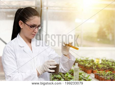 Biologist Pouring Chemicals In Pot In Greenhouse
