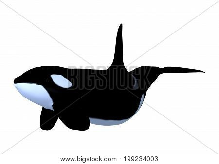 3D Rendering Killerwhale On White