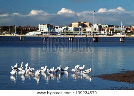 Group of Seagulls standing on the sea and city in the background in warm colors.
