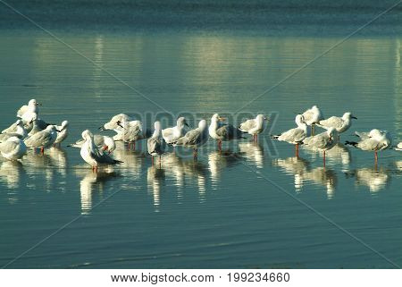 Group of Seagulls standing on the sea.