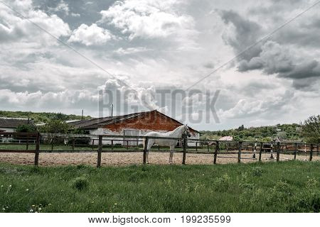 Gray horse standing in the paddock near the stables outdoors free space. Beautiful stormy sky with clouds over the stables