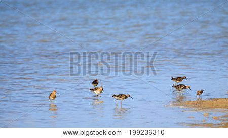 Wader herd small bird stand on shore of salt lake.