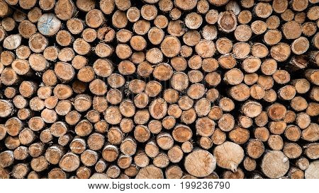 Sweden May 2017: Wood texture background have many logs that cut from big tree and small tree