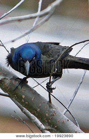 intense looking blackbird