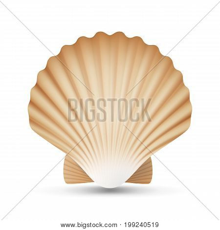Scallop Seashell Vector. Realistic Scallops Shell Isolated On White Background Illustration