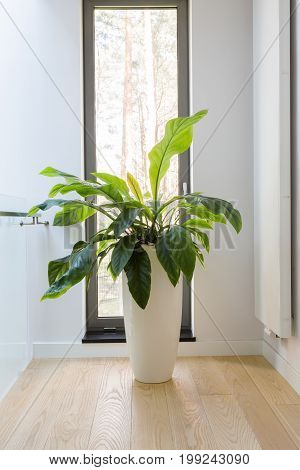Plants Are Essential In The Interior