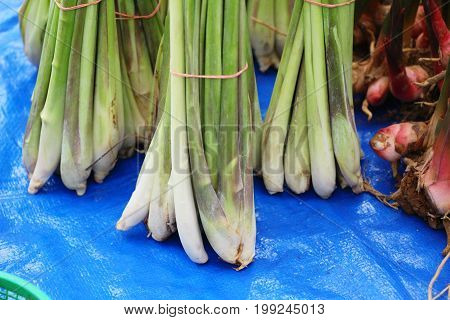 Fresh lemon grass in the market for cooking