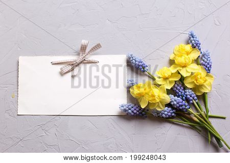 Spring yellow and blue flowers and empty tag on grey textured background. Selective focus. Place for text. Top view.