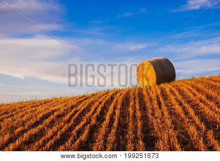 Hay bales on the field at sunset Tuscany Italy