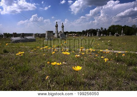 Wildflowers blooming in the St. Olaf cemetery near Clifton, Texas during springtime