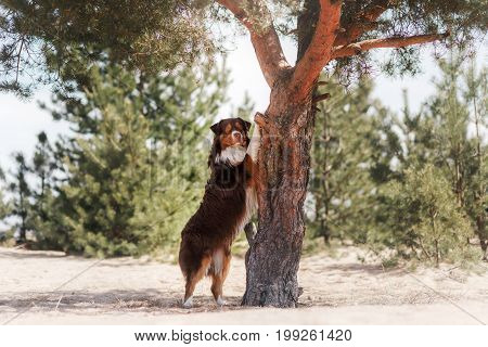 Dog Paws Relies On The Tree