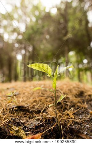 A small sprout of wood in the ground in the open air .