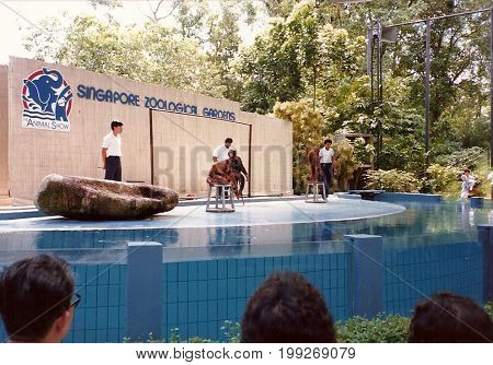 SINGAPORE - CIRCA 1990: The Animal Show at the Singapore Zoological Gardens features performances with orangutans and chimpanzees.