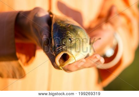 Carp in the fisherman's hand at sunset .