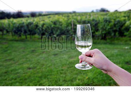 Glass of wine in vineyard of southern Moravia, Czech republic