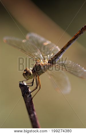 Close-up Photo Of A Dragonfly