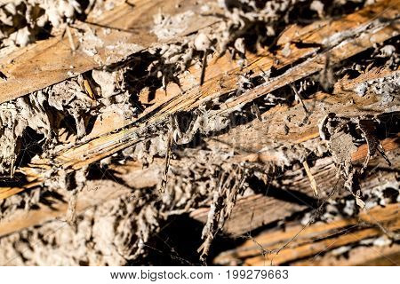 Abstract wooden background with drenched concrete. texture