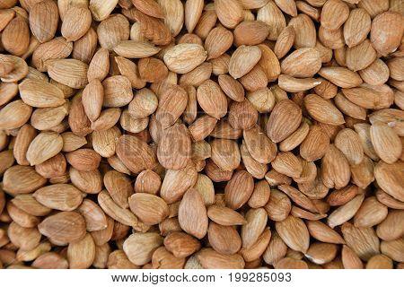 Dried Almond Kernel