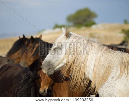 group of beautiful wild horses in nature