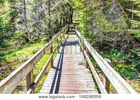Trail hiking in Bonaventure island by Perce Quebec in Gaspe Gaspesie region with wooden boardwalk