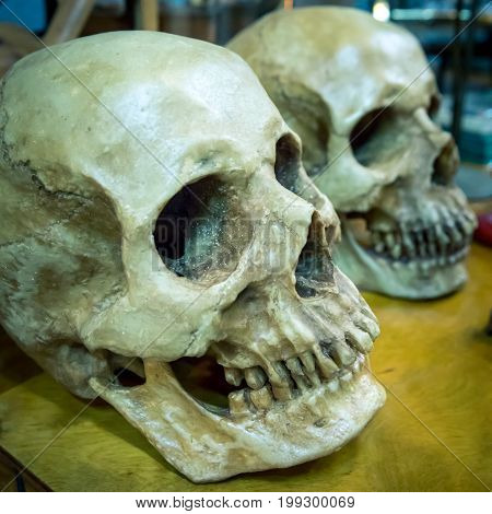 Close up of human skulls on the table