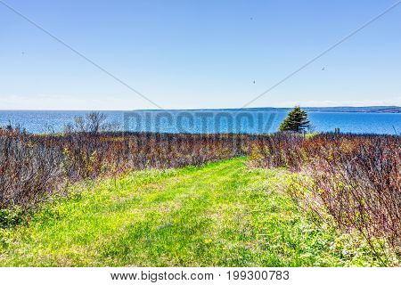 Trail Hiking In Bonaventure Island By Perce, Quebec In Gaspe, Gaspesie Region With Red Bushes