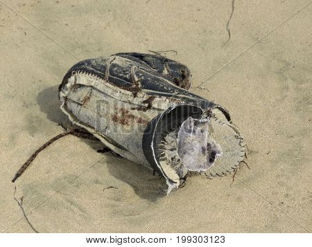 Sad Image of Poverty - Decaying shoe lost and washed up on beach.