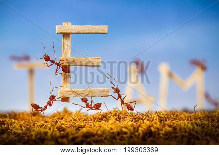 Ants carrying wording team on blue sky background , teamwork concept