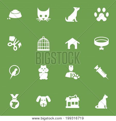 Collection Of Rat, Medallion, Veterinarian And Other Elements.  Set Of 16 Animals Icons Set.