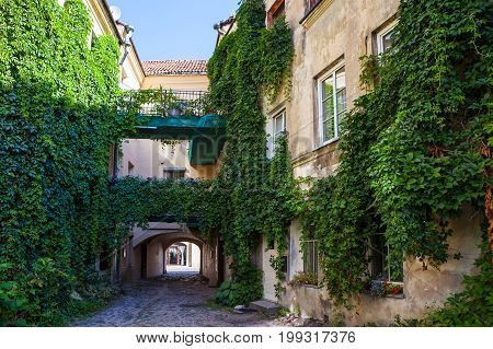 House facade with wild grapes plants, cosy courtyard in Vilnius, Lithuania