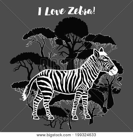 Zebra and savanna trees print. Hand drawn sketches. Vector Illustration