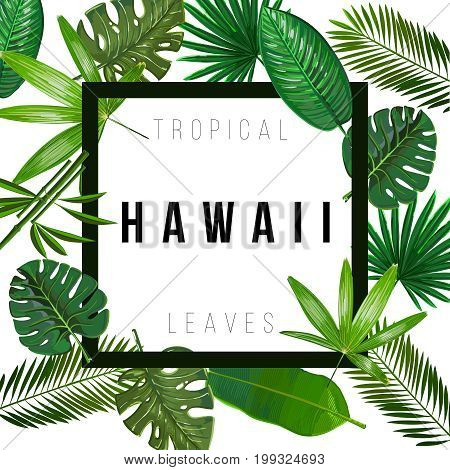 Tropical leaves on white background with isolated sign Hawaii. Pattern nature. Vector art isolate.