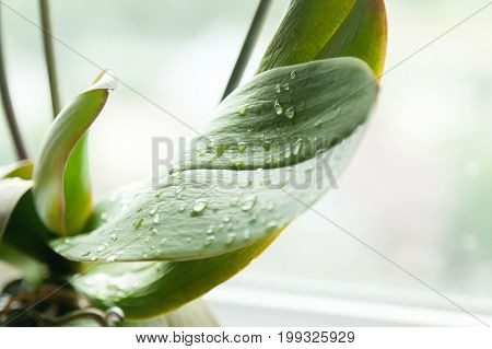 Dew drops on a green floral sheet with a light blurred background