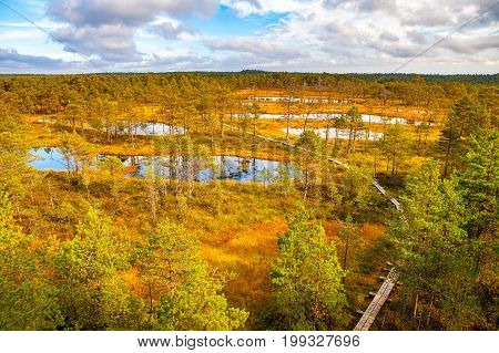 Aerial view of swamp lakes and wooden path at autumn season. Viru bogs at Lahemaa national park