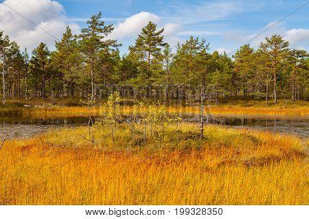 Island in swamp lake, autumn season. Viru bogs at Lahemaa national park