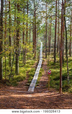 Forest wooden path walkway through wetlands in Estonia