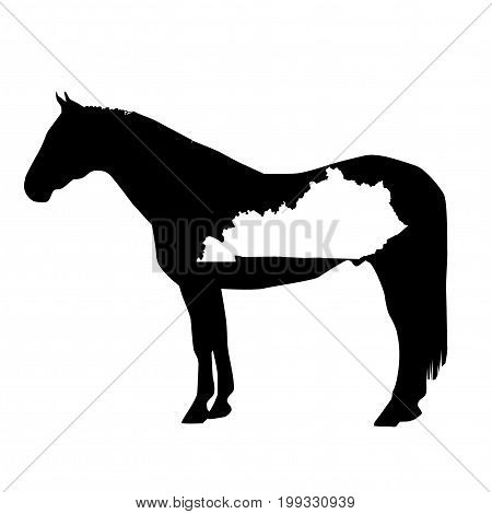 Vector Horse Silhouette With Kentucky Boundary Patch Illustration