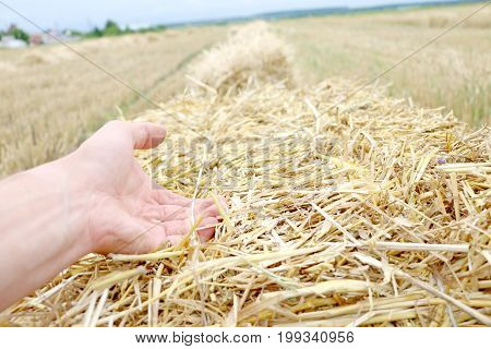 strong male hand holding a pressed bale