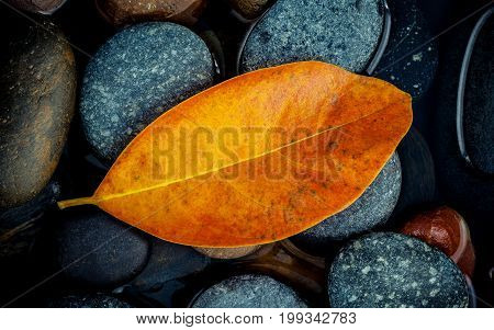 Autumn season and peaceful concepts. Orange leaf on river stone . Abstract background of autumn leaf on black stone with water drop.