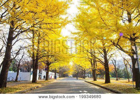 The Fall Season In The Autumn Hokkaido University