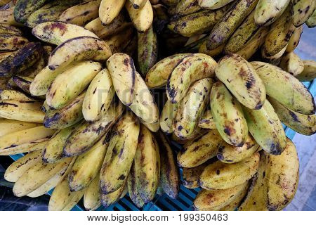 Cultivated Banana For Retail Sale At Local Fruit Market