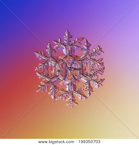 Real snowflake macro photo: large stellar dendrite snow crystal with elegant arms, massive hexagonal center, fine hexagonal symmetry and glossy surface. Snowflake glittering on blue - pink background.