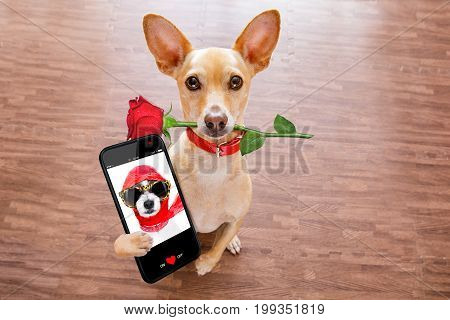 Valentines Dog In Love With Rose In Mouth