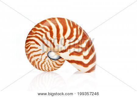 nautilus shell isolated on white background