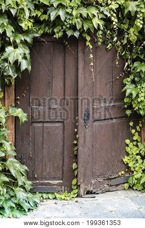 Old wood door with ivy around Hessen Germany