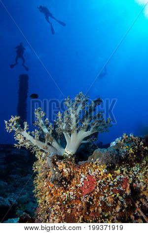 Coral garden in the red sea in egypt around numidia