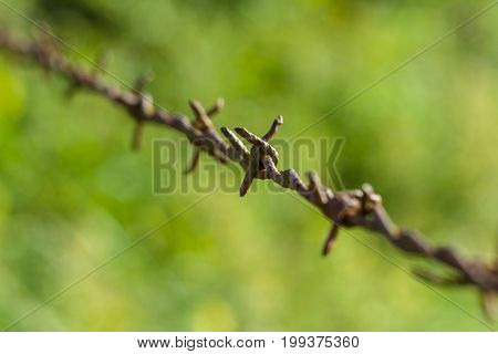 Rusty barbed wire. Small DOF. Focus on the center.