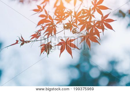 Autumn color change is season colorful with red and yellow leaves alternates beautiful nature background in Eikando temple Kyoto Japan.